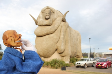'Wow...Australia has big sheep!' - Igor's Travels